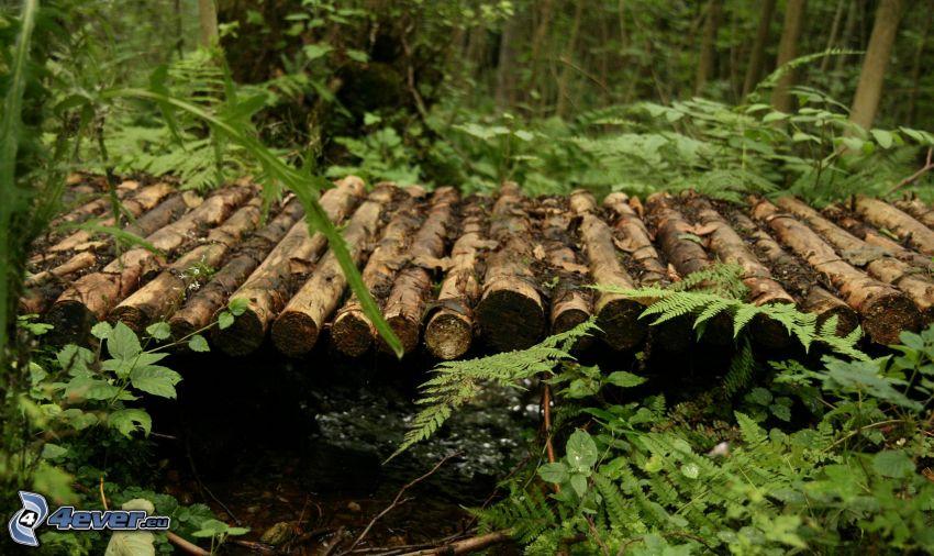 Holzbrücke im Wald, Grün