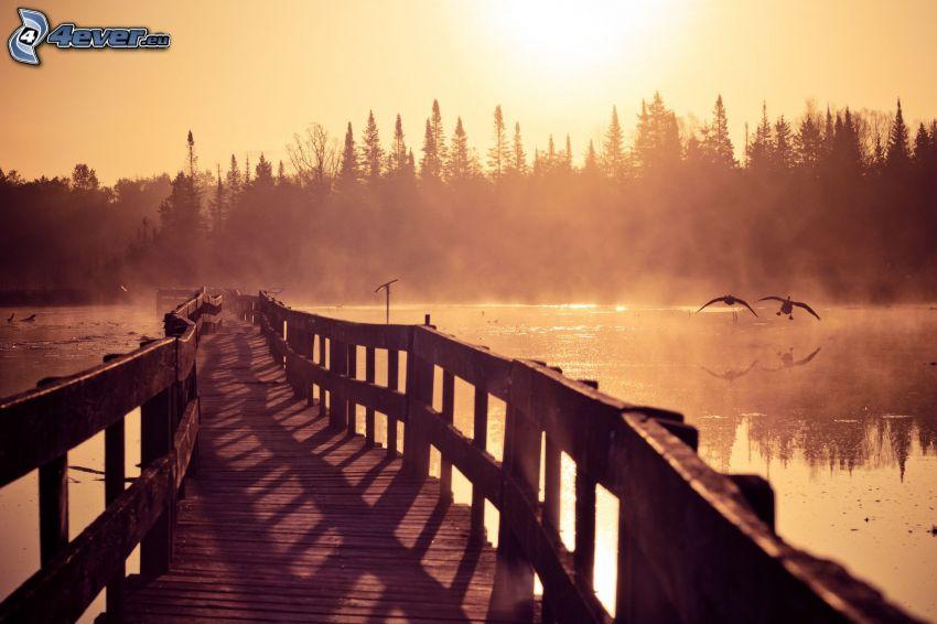 Holzsteg, Fluss, Sonnenuntergang über dem See, Silhouette eines Waldes