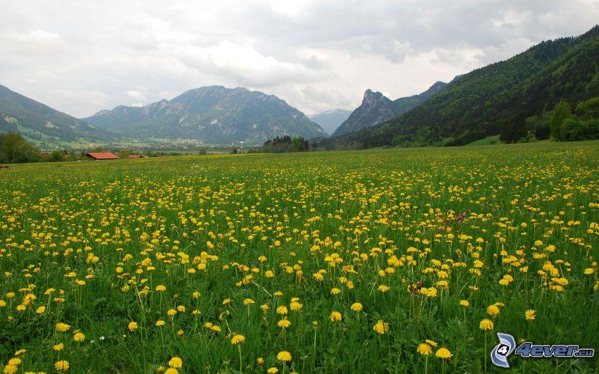 hundeblume Wiese, Berge