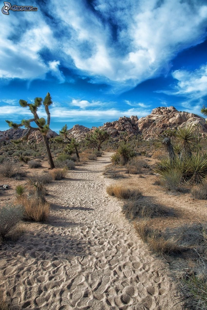 Joshua Tree National Park, Gehweg, Bäume, Felsen