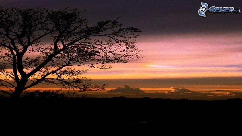 Abendhimmel, Silhouette des Baumes