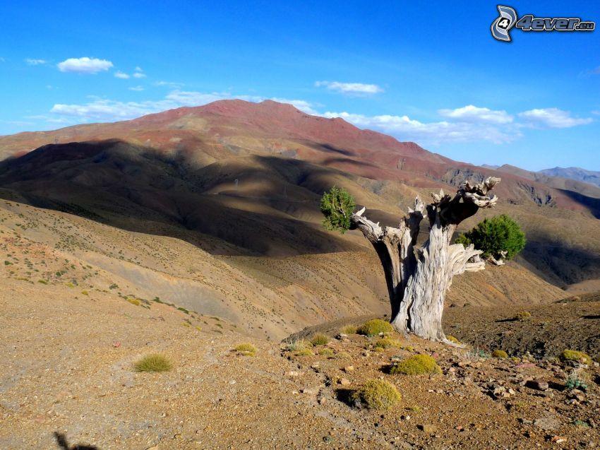 alter Baum, Hügel