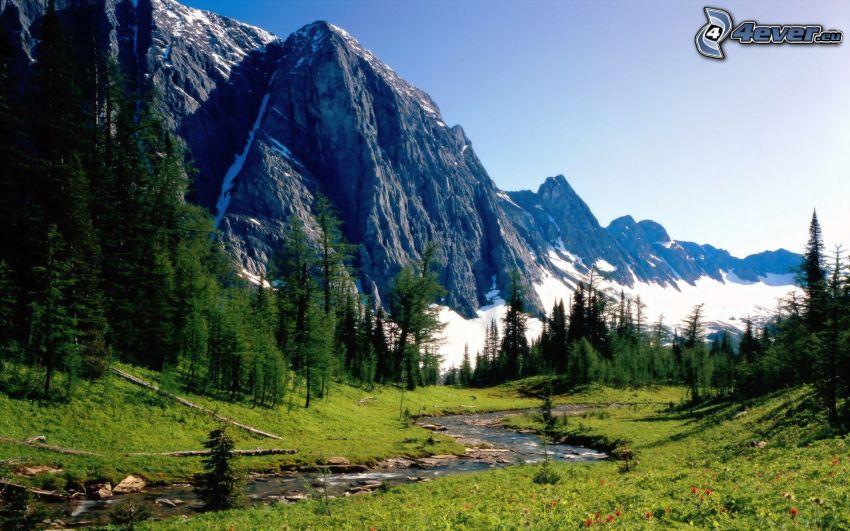 Banff-Nationalpark, felsiger Berg, Bach, Wald, Gras