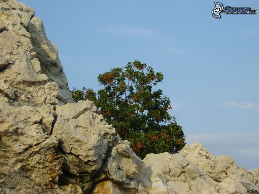 Baum auf dem Felsen