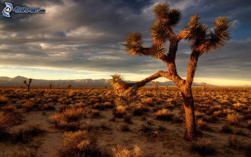 Baum in der Wüste, dunkle Wolken