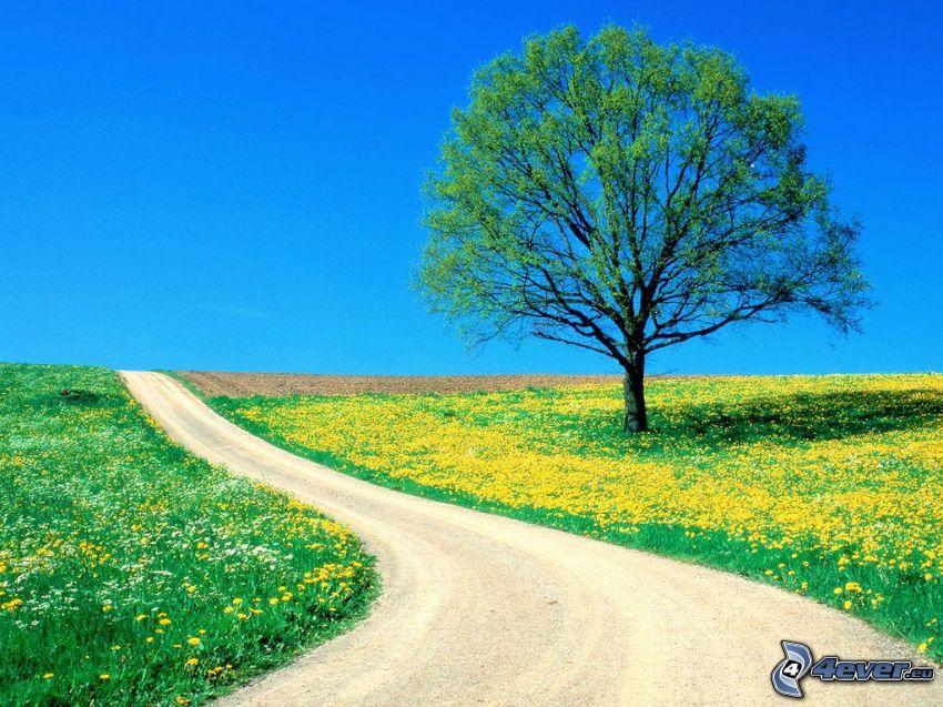 Baum über dem Feld, gelbe Blumen, Straße
