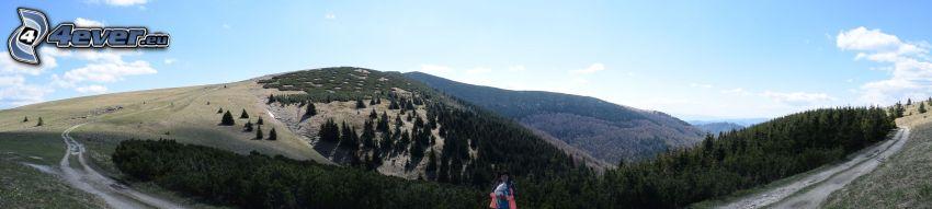 Berge, Feldweg, Wald, Panorama