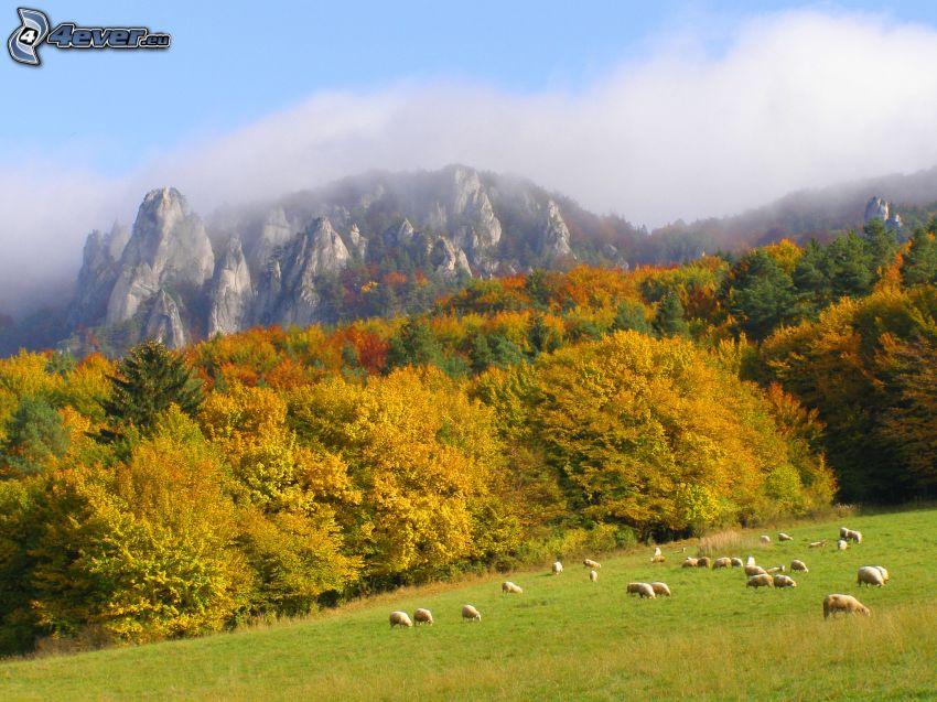 bunter herbstlicher Wald, Schäfchen, Berge