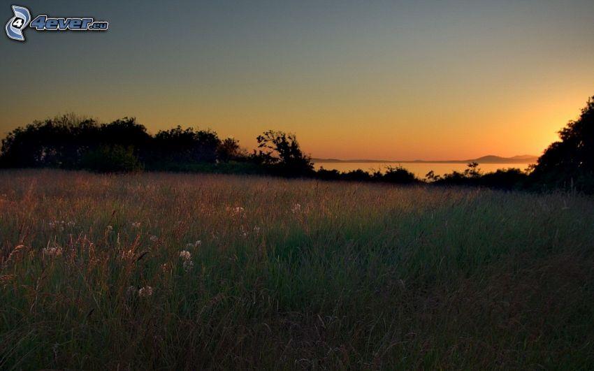 die Wiese, Sonnenaufgang