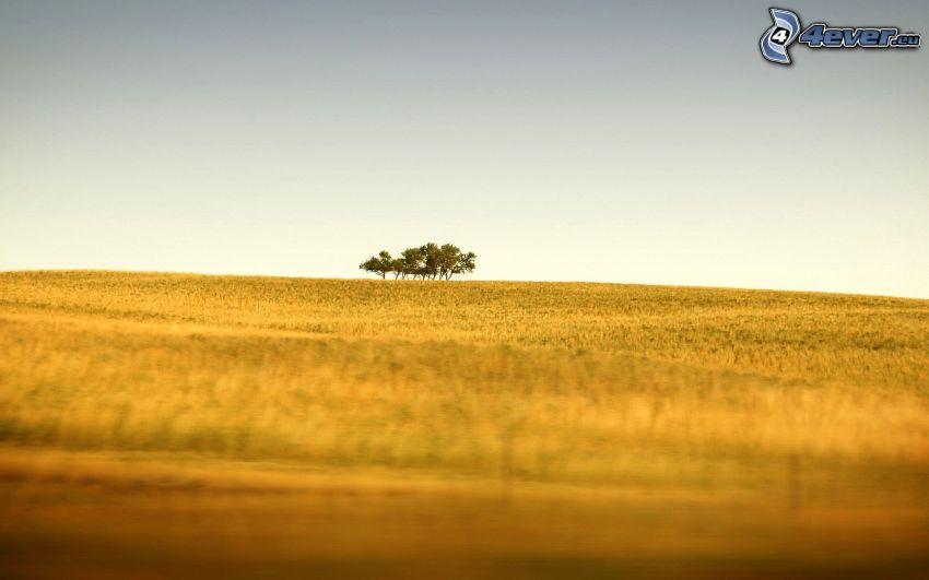 Feld, Bäume