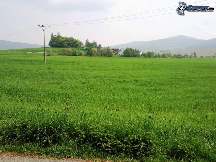 Feld, Wiese, Grün