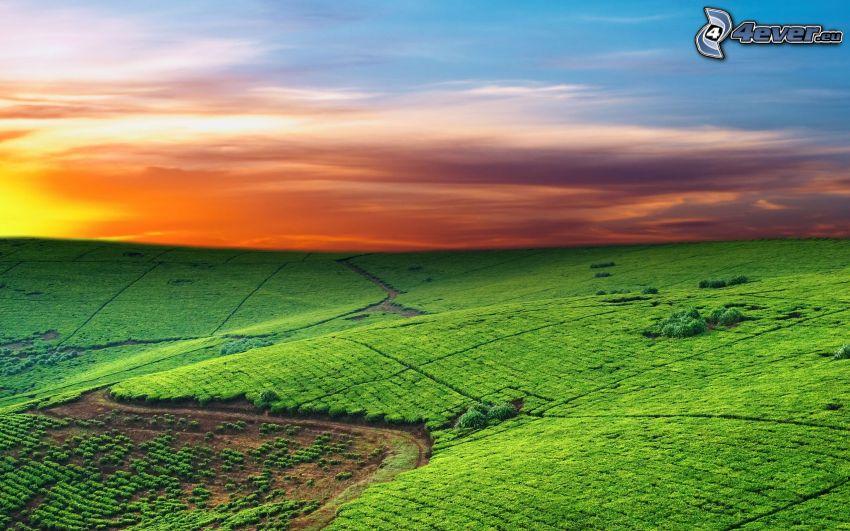 Felder, orange Himmel