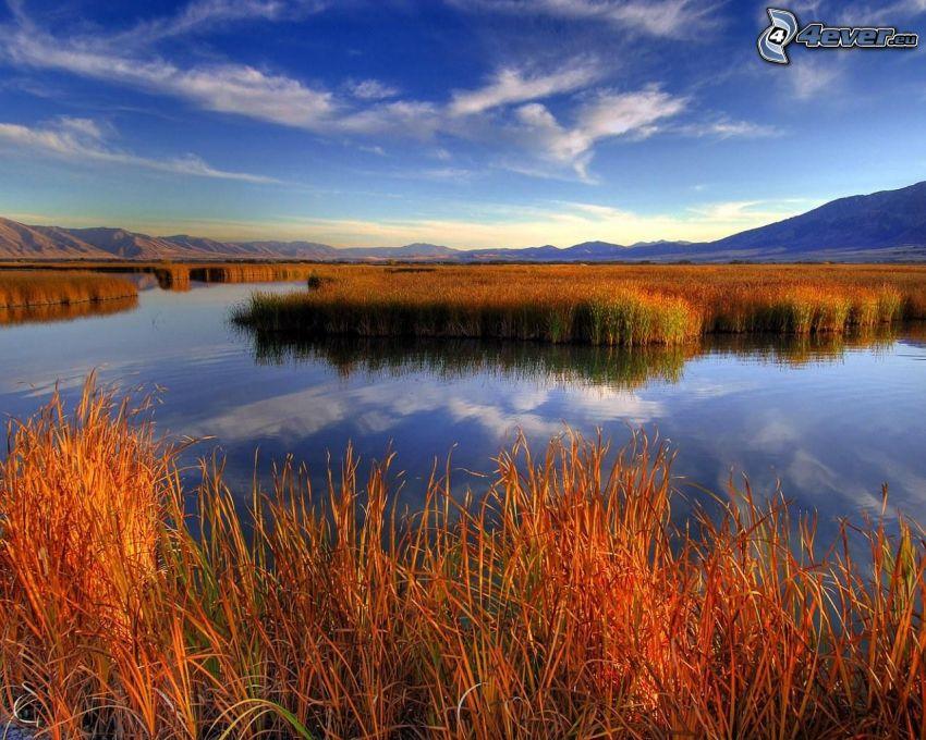 Feuchtgebiete, Gras, Wasser