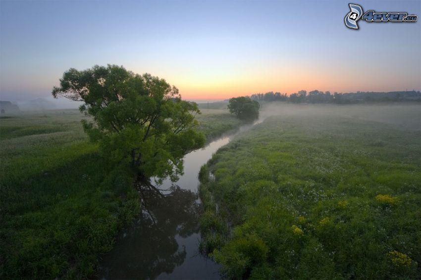 Fluss, Baum, Grün, nach Sonnenuntergang