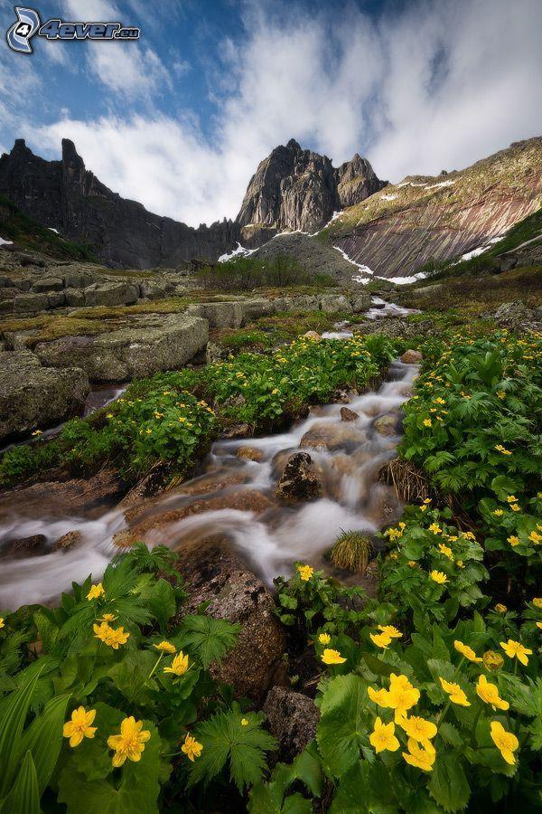 Gebirgsbach, felsige Berge, gelbe Blumen