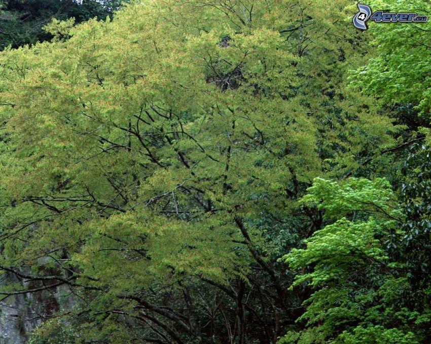 grüne Äste, Wald
