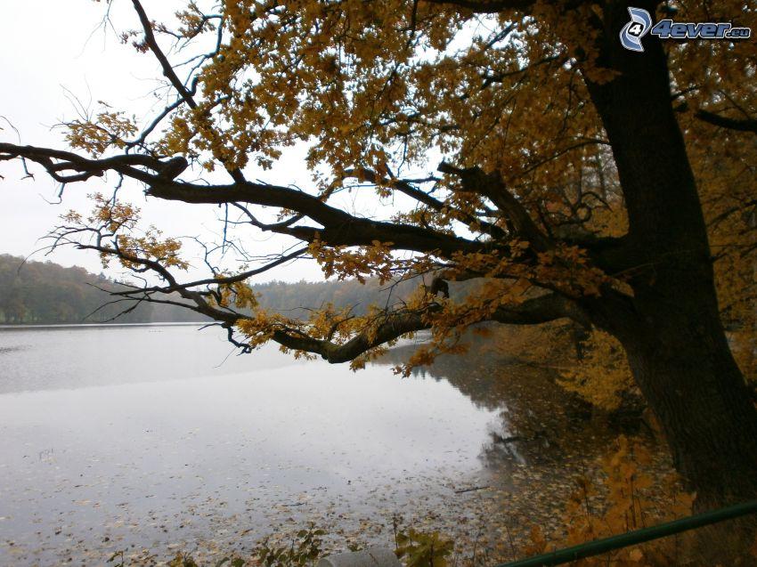 herbstlicher Fluss, gelber Baum