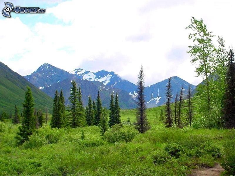 hohe Berge, Nadelbäume, Hochgebirge, Gipfel