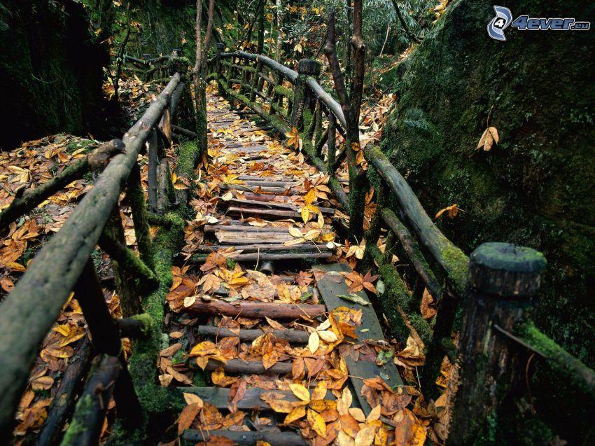 Holzbrücke im Wald, Natur, Weg, gelbe Blätter