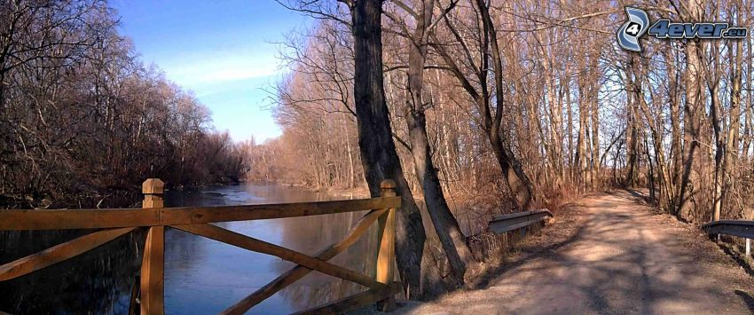 Kleine Donau, Straße, trockene Bäume