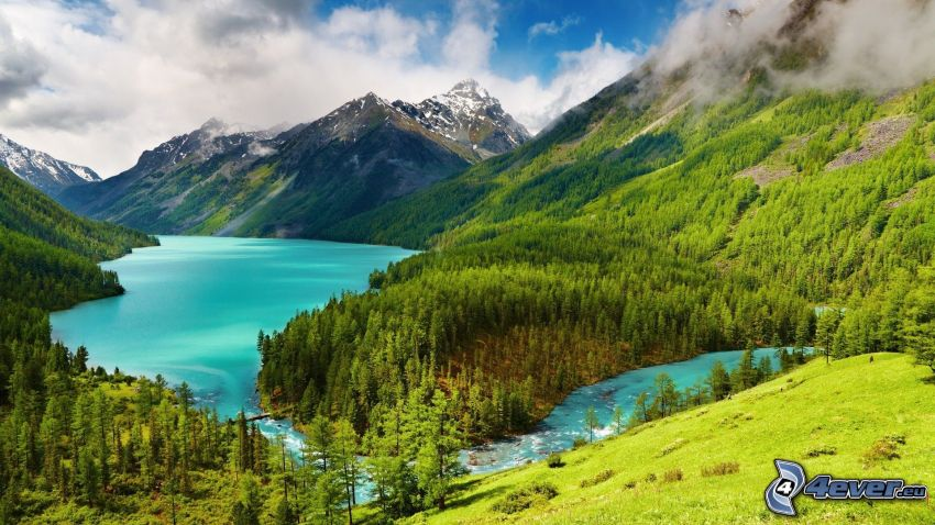 Landschaft, Berge, Wald