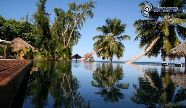 Madagascar, Palmen, Bassin