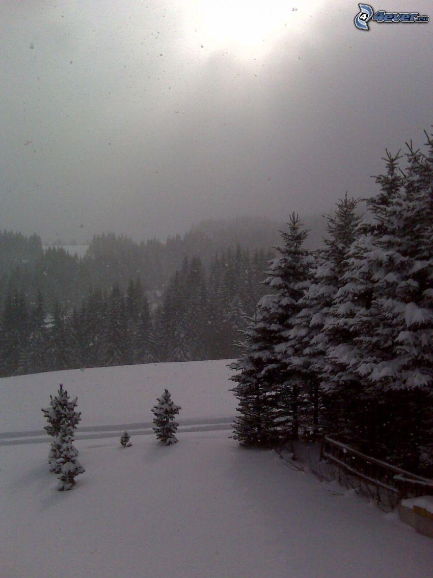 Orava, Schnee, Berg