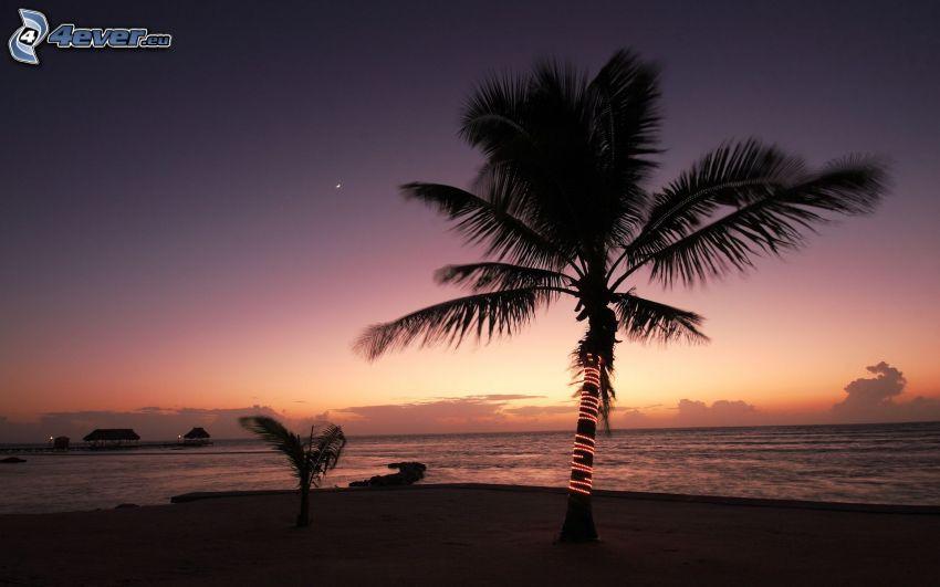 Palme, Meer, Ozean