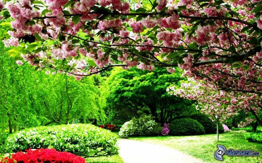 Park, blühender Baum, blühende Sträucher