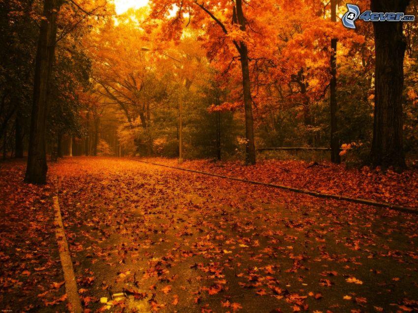 Pfad durch den Wald, gelbe Bäume, trockene Blätter, Herbst, bunte herbstiche Bäume