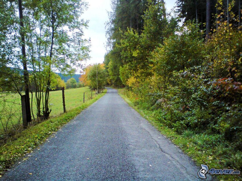Pfad durch den Wald, Herbst, Wiese