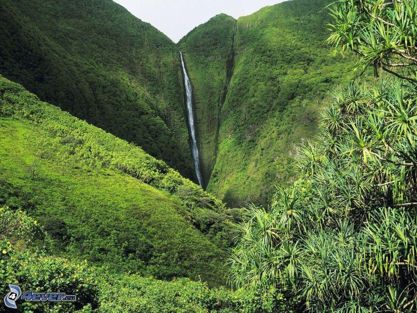 riesiger Wasserfall, Berg, Grün