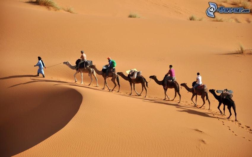 Sahara, Sand, Kamele, Menschen, Wüste