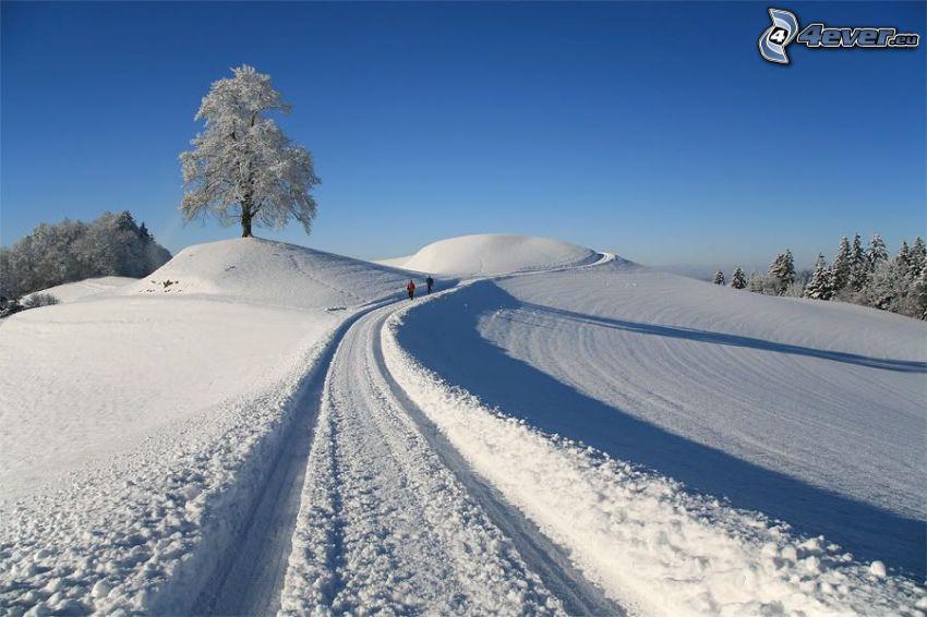 schneebedeckte Straße, einsamer Baum, schneebedeckter Baum, Touristen, verschneiter Wald, Schnee
