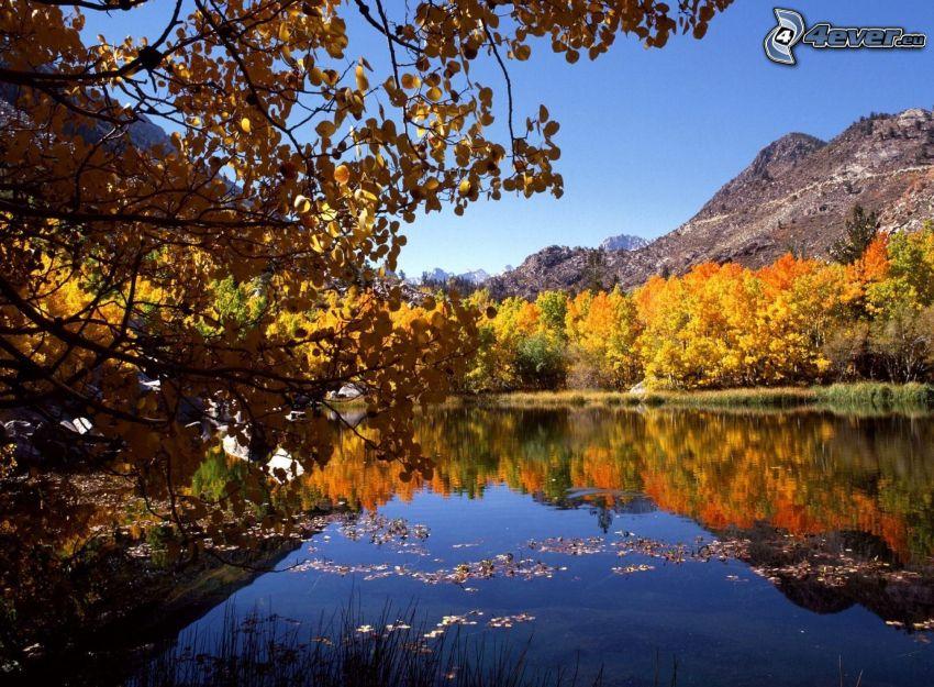 See, gelbe Bäume, Hügel