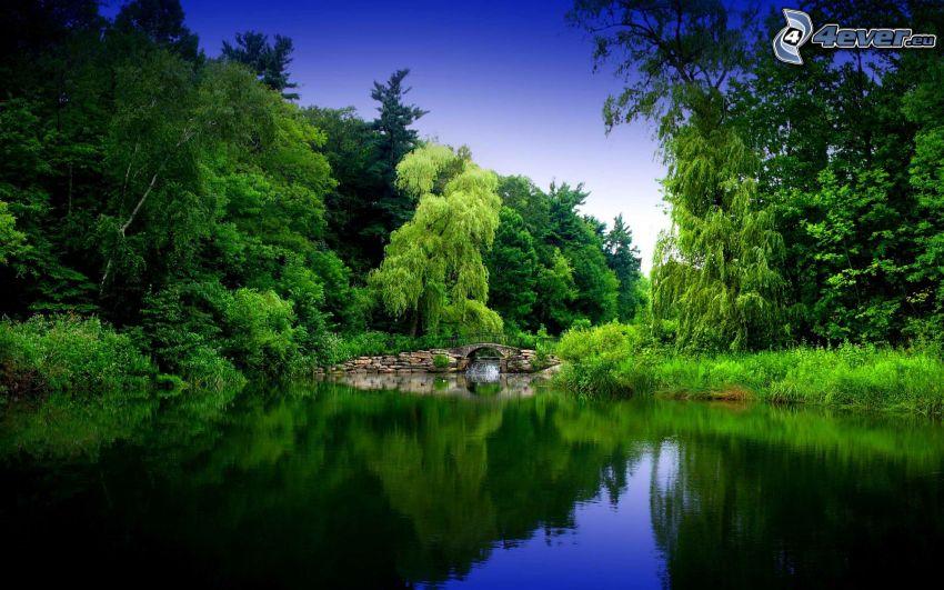See im Wald, Grün