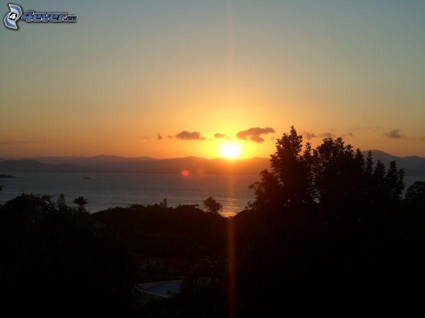 Sonnenuntergang am See, großer See, Bäum Silhouetten