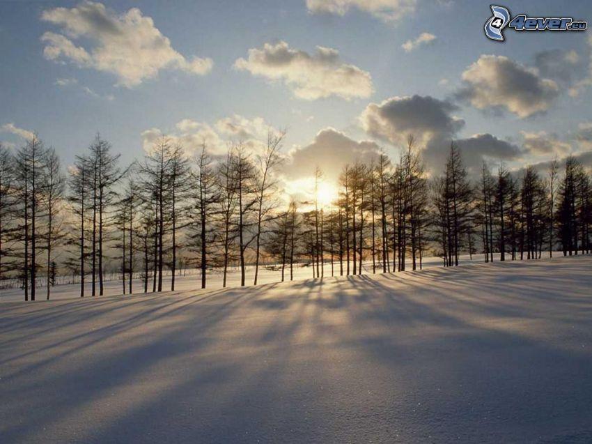 Sonnenuntergang im Winter, Schnee, Baumreihe