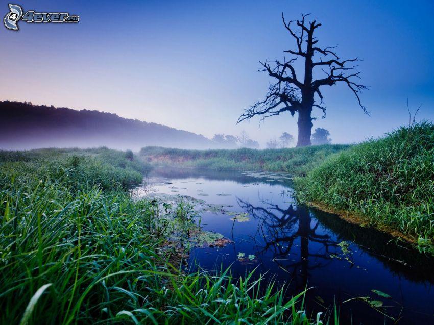 Sumpf, Bach, Gras, trockener Baum