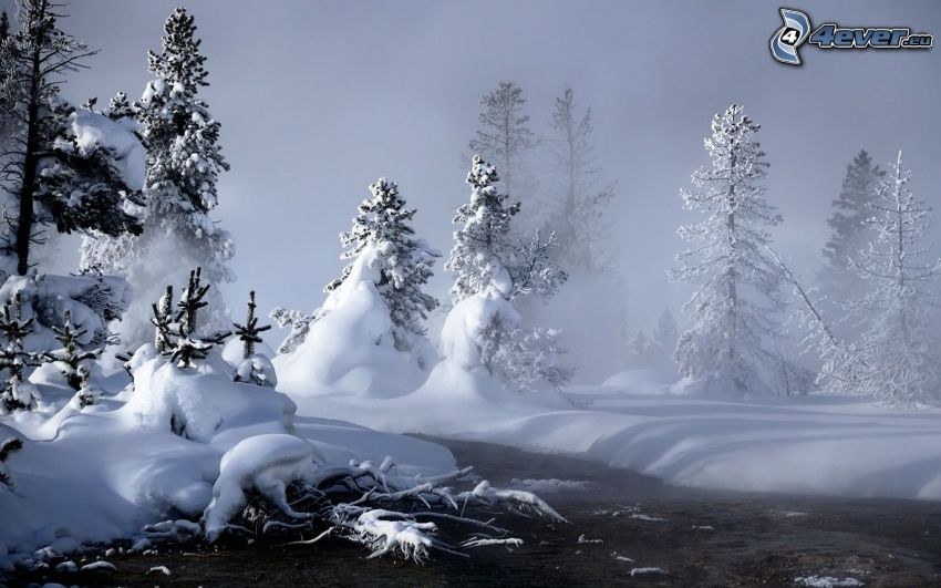 verschneite Bäume, Bach