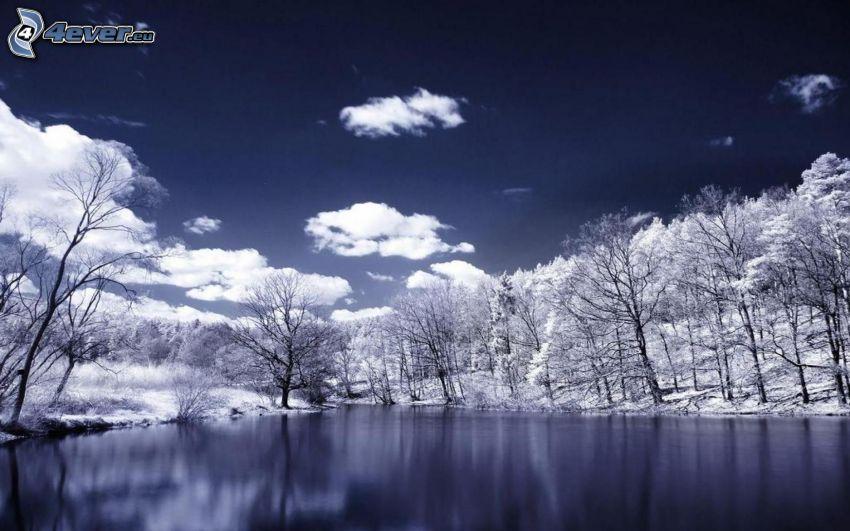 verschneite Bäume, Fluss