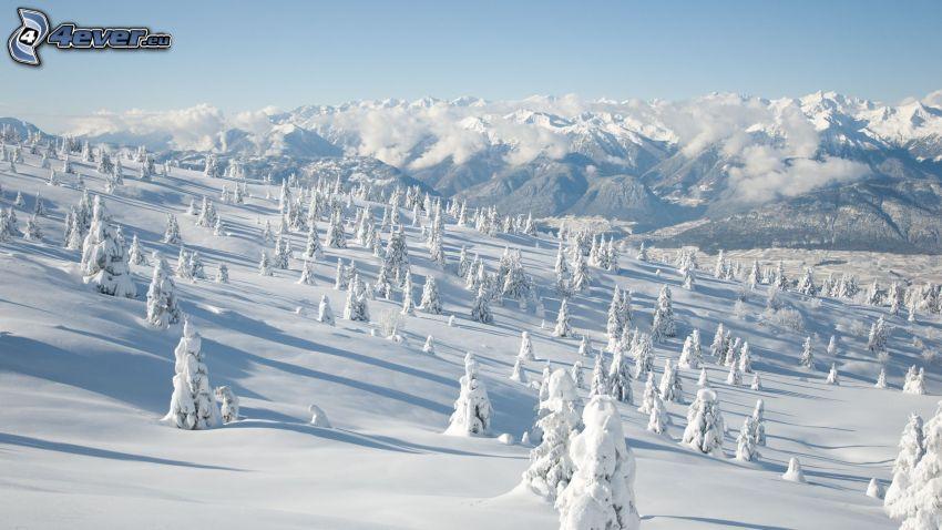 verschneite Landschaft, Bäume, Berge