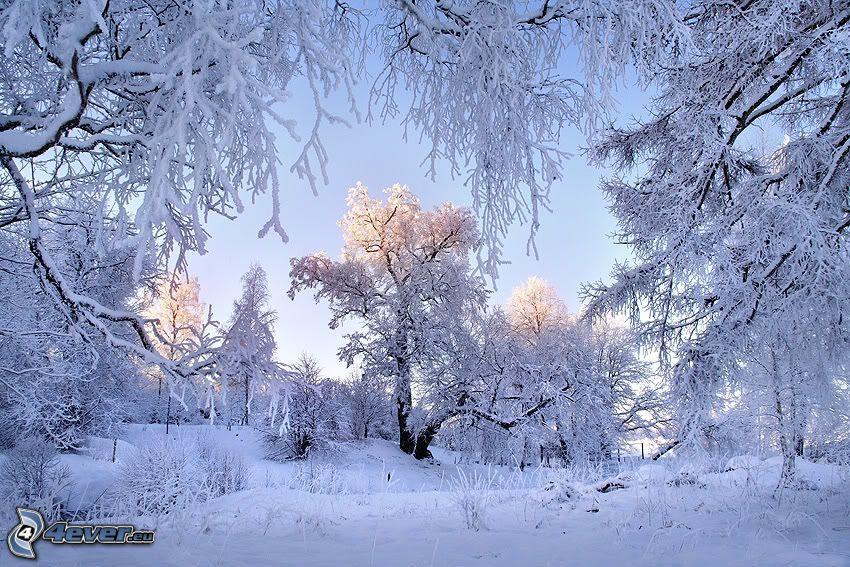 verschneite Landschaft, gefrorene Bäume