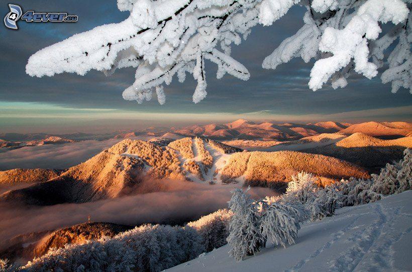 verschneite Landschaft, Spuren im Schnee, Sonnenuntergang in den Bergen, Hügel, Zweige