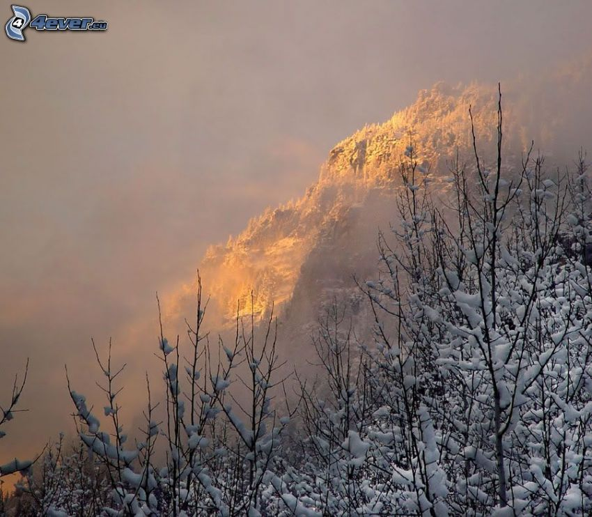 verschneiter Berg, Wald