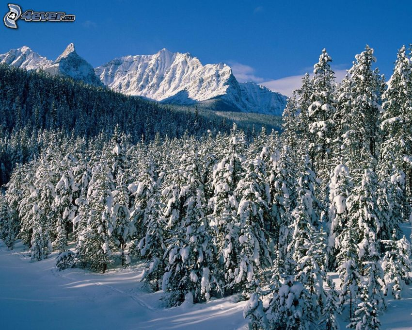 verschneiter Wald, schneebedeckte Berge