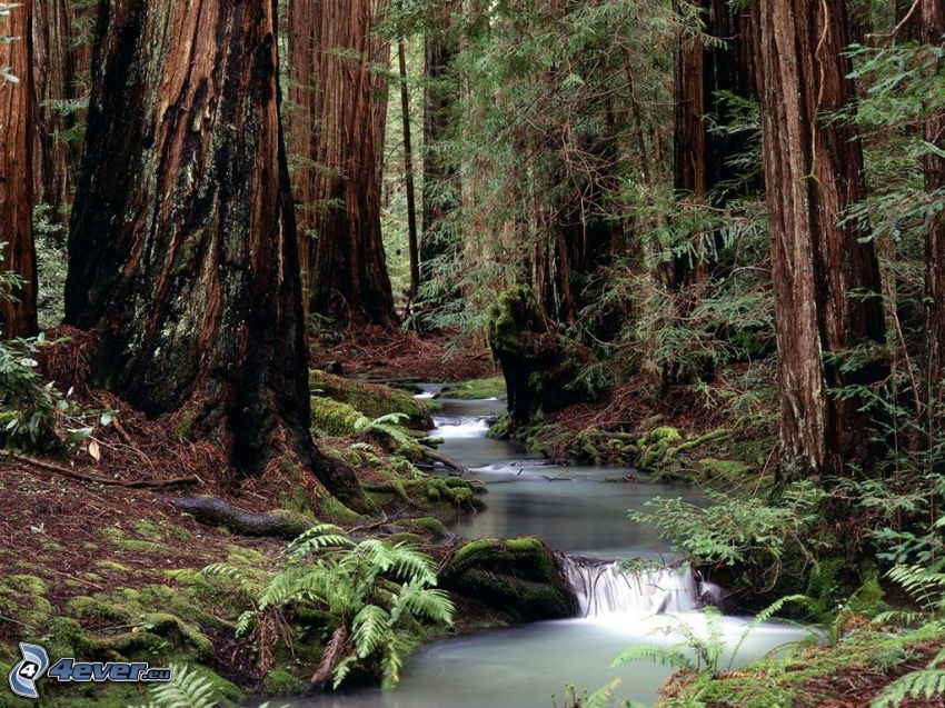 Wald, Bach