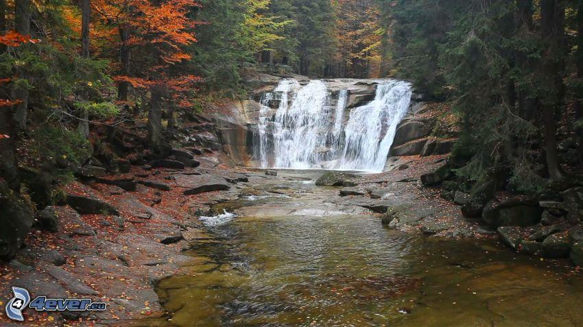 Wasserfall, Fluss im Wald