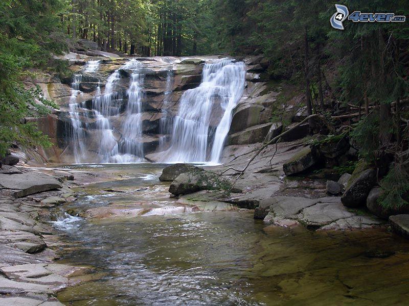 Wasserfall, Wasserfall im Wald, Bach