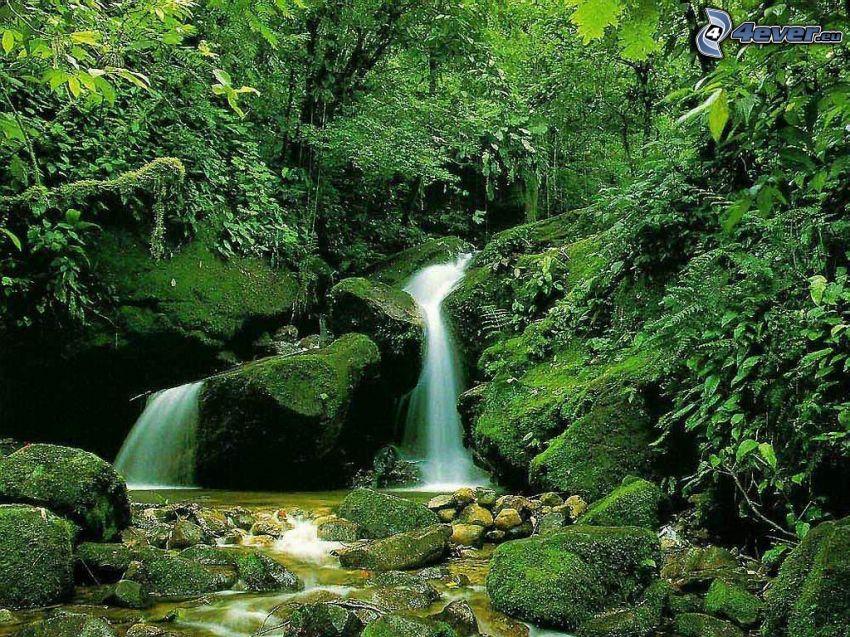 Wasserfall im Urwald, Felsen